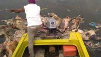 Kapolda Sumut Curiga Pengusaha Sengaja Buang Bangkai Babi ke Sungai dan Jalan