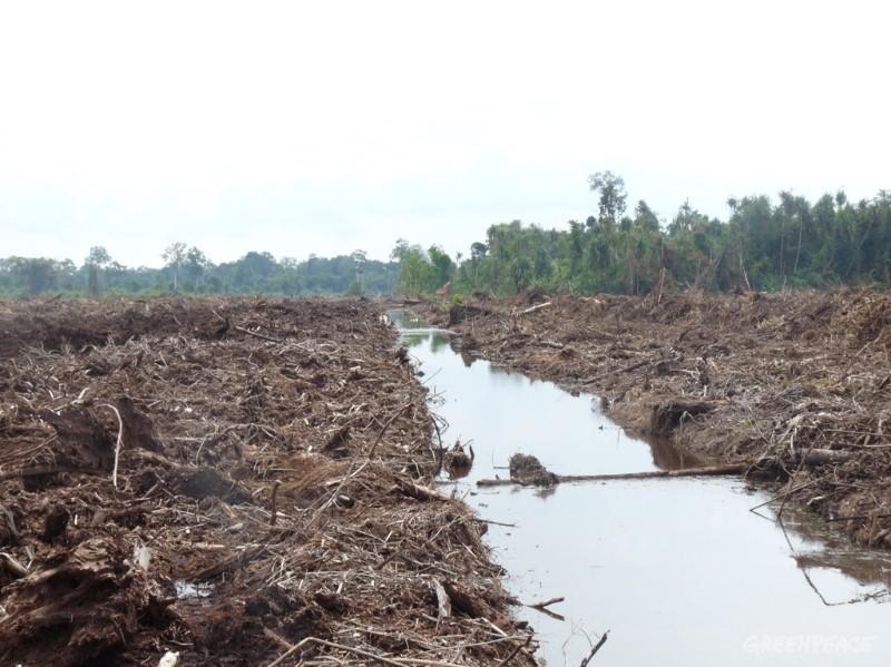 BUMN Diminta Jokowi Keroyokan Cetak Sawah, Antisipasi Krisis Pangan
