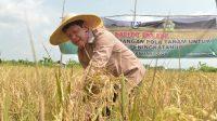 Isdianto Ingin Pertanian Tumbuh dan Menyejahterakan Rakyat